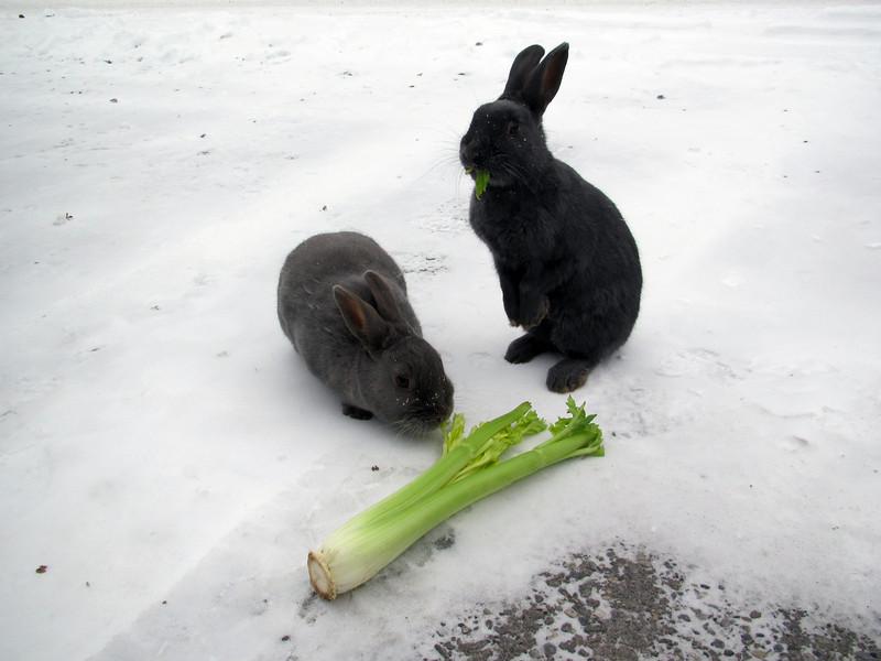 <b>17 Nov 2010</b> Starving town bunnies