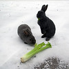 <b>17 Nov 2010</b> Starving town bunnies
