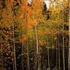 <b>17 Sept 2010</b> Autumn in Canmore