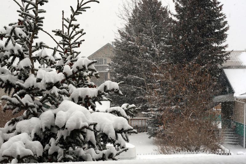 <b>14 Jan 2011</b> More snow