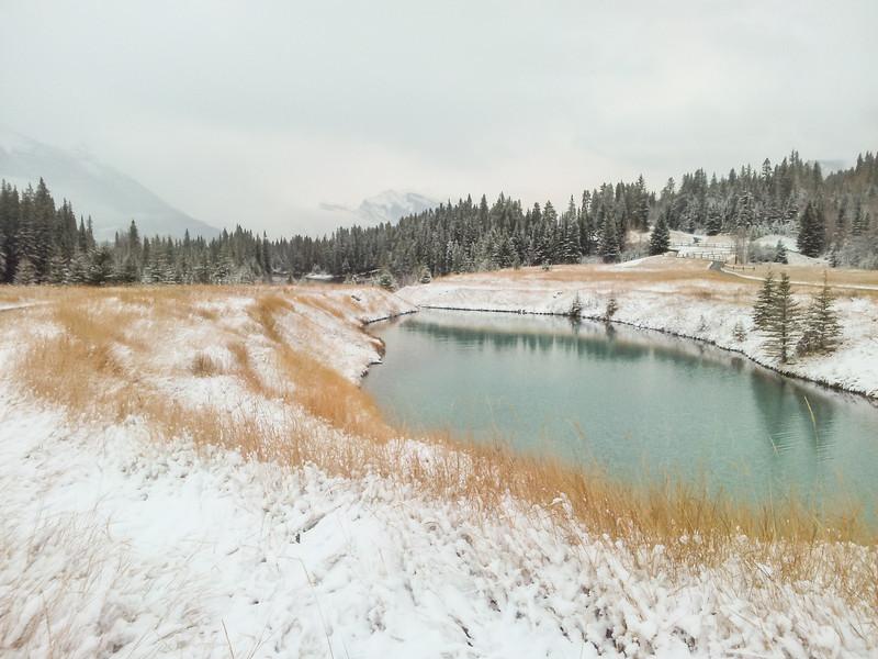 <b>20 October 2012</b> Smelly pond