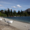 Seagulls on the shore of Lake Wakatipu, Queenstown