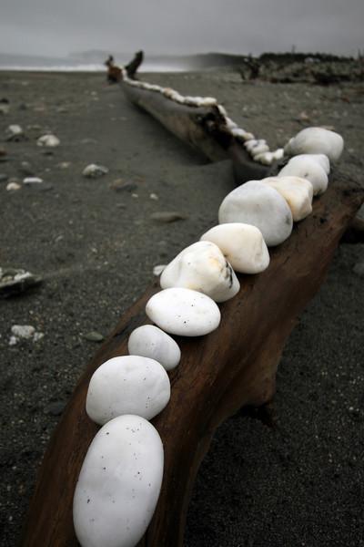 White rocks on driftwood, Bruce Bay