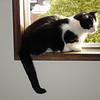 Klaus perches birdlike in the windowsill