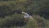 JD2A9248   Egret