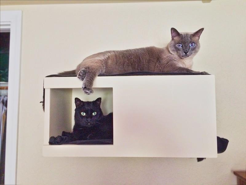 ++2018-0401 IMG 2959 Turk & Sofia in the Cat Condo – Version 2