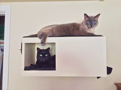 ++2018-0401 IMG 2959 Turk & Sofia in the Cat Condo – Version 2