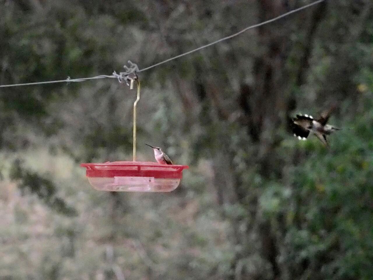 +2018-03270291 Hummingbirds Are Back – Version 2