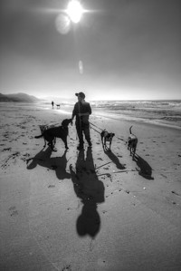 Dogs and dogwalker at Fort Funston, San Francisco