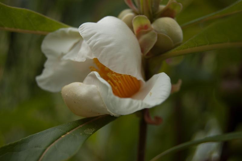 Various flowers and plants / Backyard photos