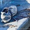 Leigh on Sea 30-11-12  025