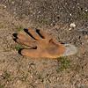 CSCC Snetterton 09-04-11  0090