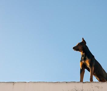 Rooftop Guardian