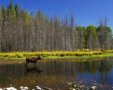 Yellowstone ...