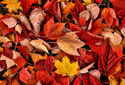 """""""Autumn ... """""""