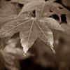 2008 Nov 01 035 bw