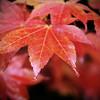 2008 Nov 01 035 copy