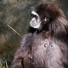 Primate-3