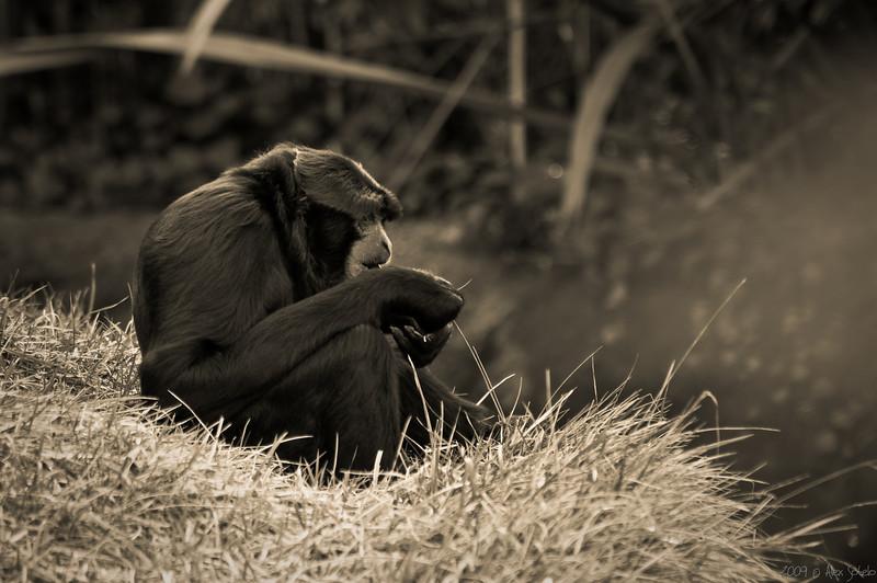 Primate-2