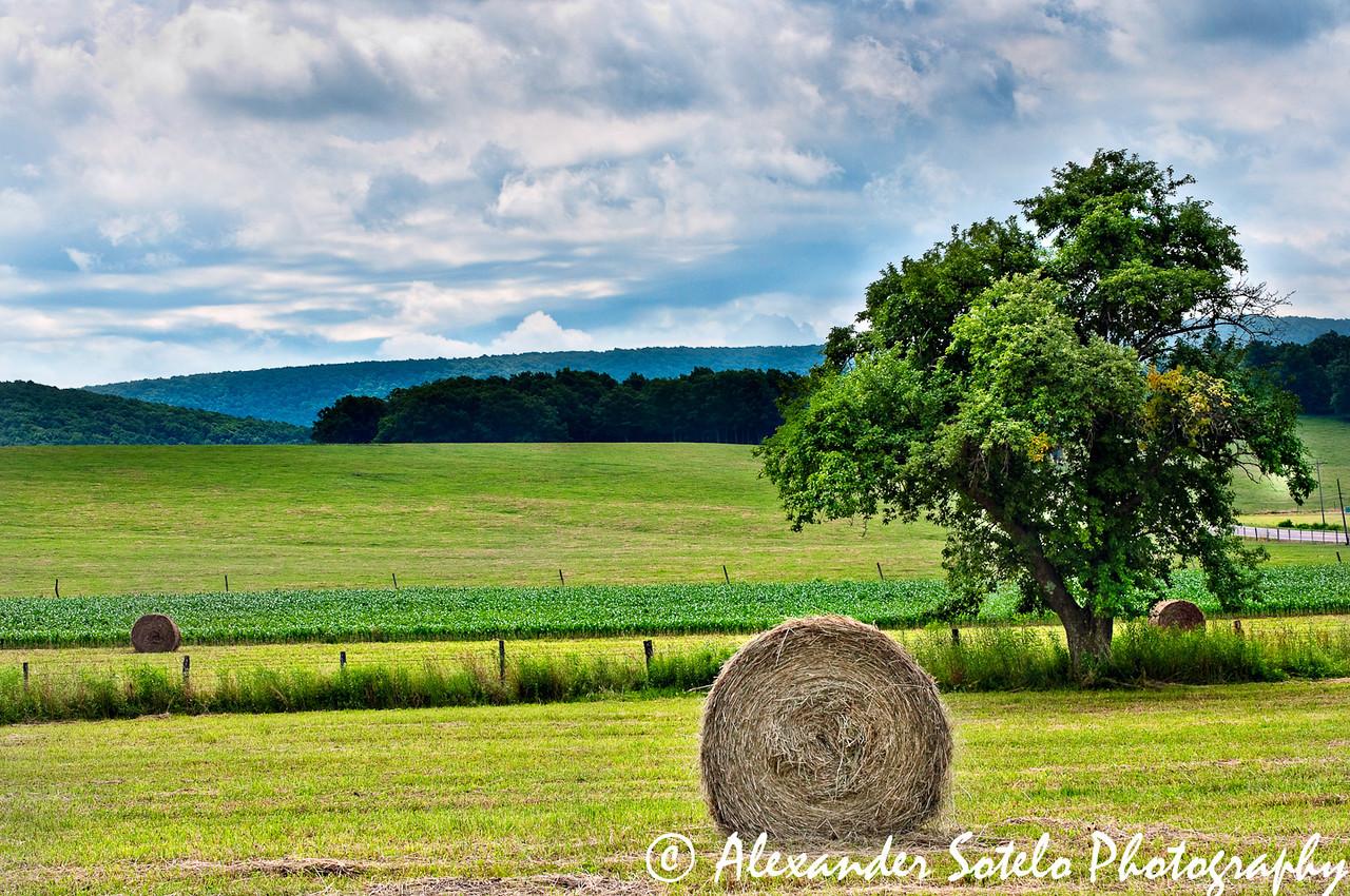 Green Field-1