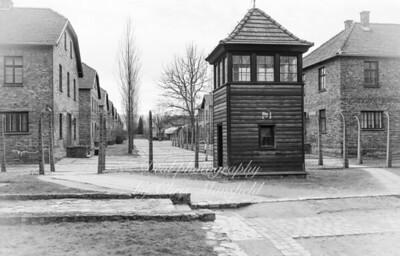 Auschwitz 25