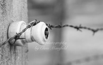 Auschwitz 21