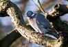 jan 25th bird 01