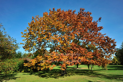 Autumn Colours at Hall Place Gardens