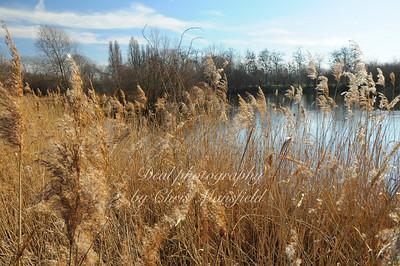 Barnes wildlife wetlands