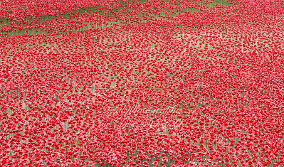 August 9th 2014 . Ceramic poppies at the tower of London