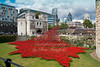 August 23rd 2014 Poppies at the tower of London