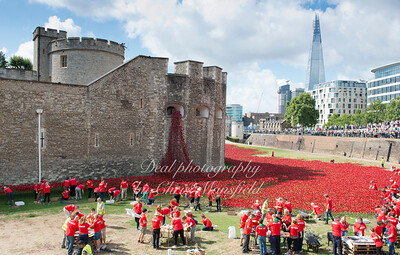 August 9th 2014. Ceramic poppies at the Tower of london