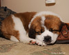 """Mini-Challenge #74 <a href=""""http://dgrin.com/showthread.php?t=126195"""">Dogs</a>"""