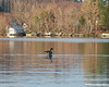 04.13.2010<br /> <br /> Today while out fishing with my uncle, we had a loon in the area at times.  Here he is in mid wing flap