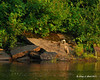 07.18.2011<br /> <br /> A great blue heron at Ashuelot River Park