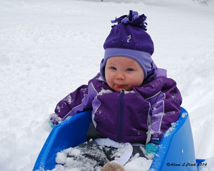 11.27.2014 <br><br>With the recent snow, Liliana was able to get her first sled ride on Thanksgiving morning