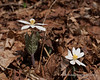 Week #15: Flowers (2/7)