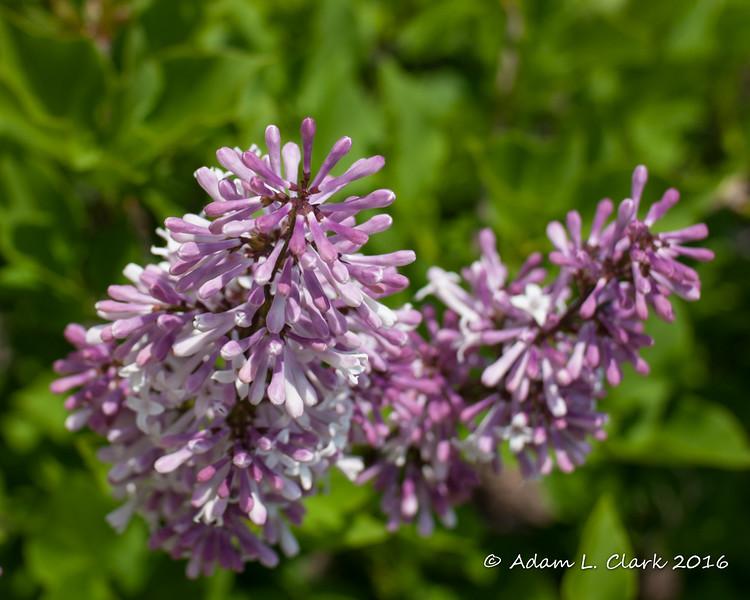 Week #15: Flowers (5/7)
