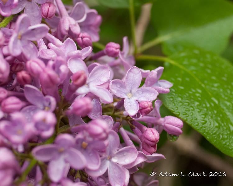 Week #15: Flowers (7/7)