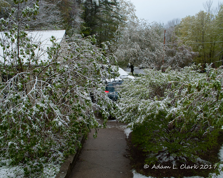 The lilac bush and burning bushes next to the walkway aren't bent over and blocking the path