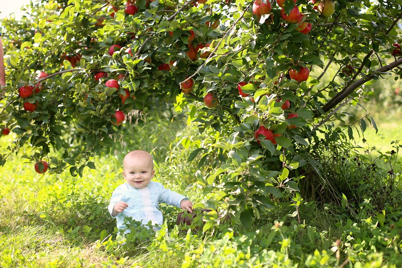 Orchard 023 | Nicole Marie Photography