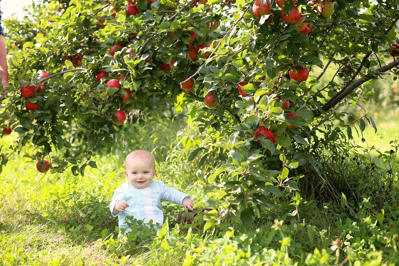 Orchard 024 | Nicole Marie Photography