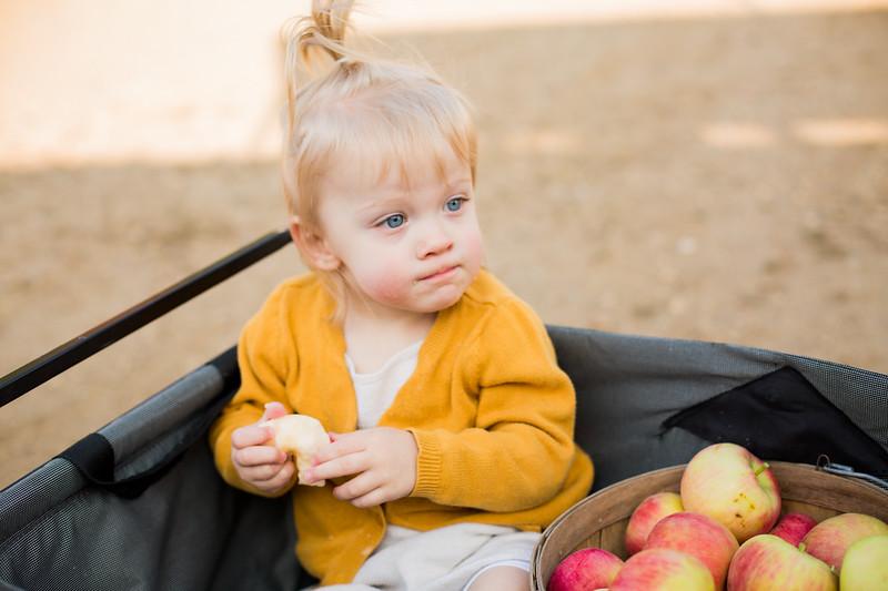 Apple Orchard 2020-099