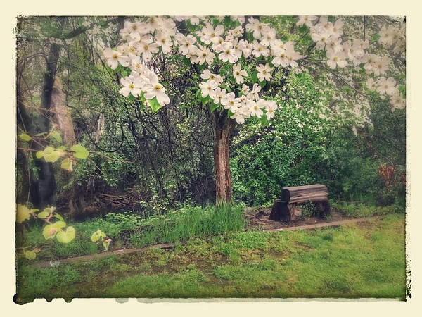 Spring Places