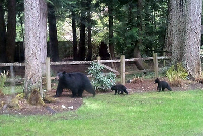 Mom and the kids crossing our neighbors yard
