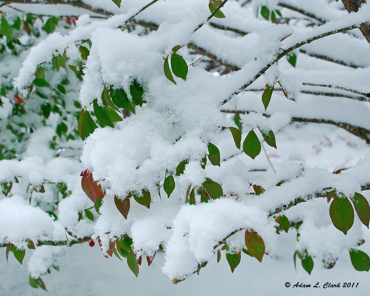 10-29-11<br /> The morning after the first snow fall of the year which amounted to 16 inches