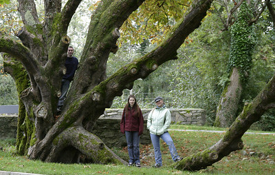 Danielle, Peggy, and Michael on the LOTR tree.