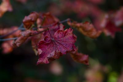 Autumn Apex