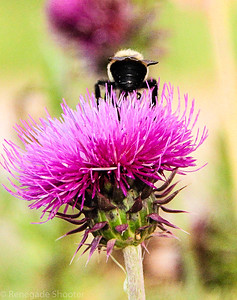 bee on top of purple flower-