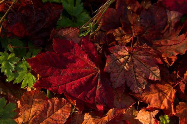 Autumn #1